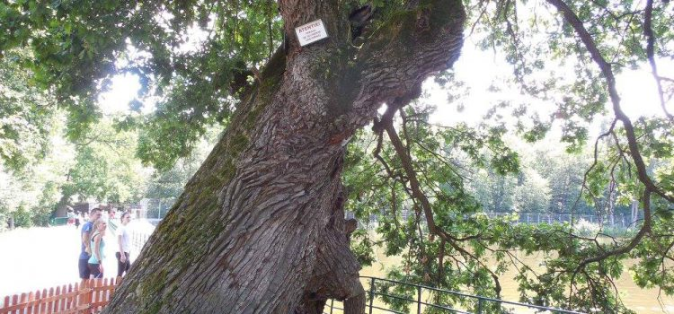 Tăierea copacilor şi lamentările facebookiste